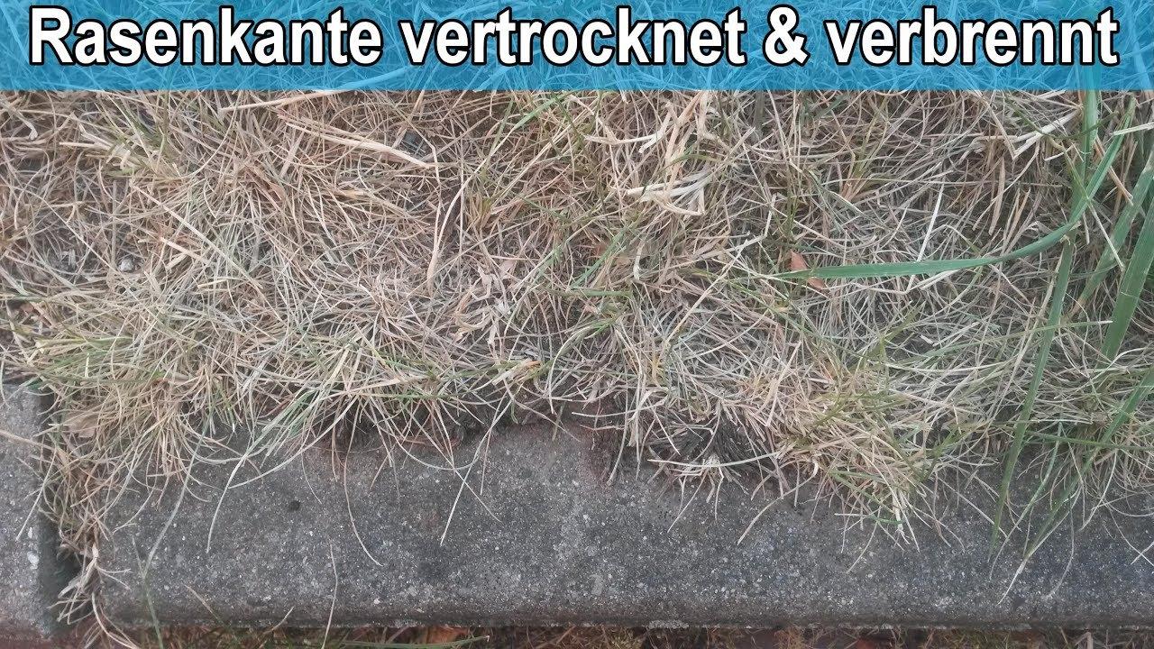 Rasen Vertrocknet Was Tun