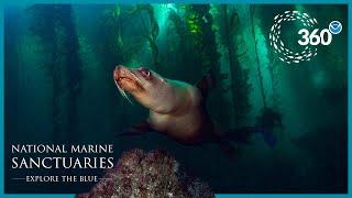 Explore the Blue: 360° Sea Lion Encounter