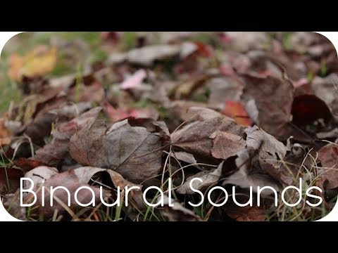 Walking in Dry Leaves Around Your Head. Nature ASMR. (Binaural/3D Sound)