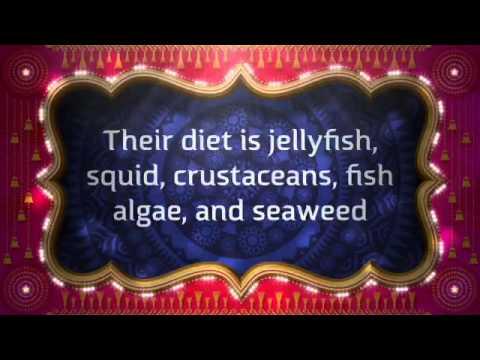 Endangered Leatherback Sea Turtle