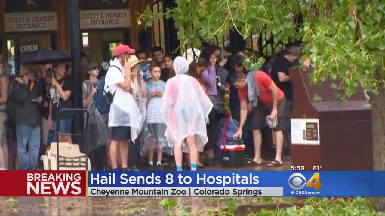 Baseball-Sized Hail Injures Zoo Visitors, Kills Two Zoo Animals