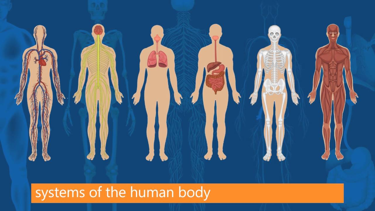 Fundamentals of Anatomy and Physiology - YouTube