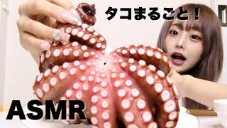 【ASMR】巨大タコ🐙のお刺身をまるごと食べる音【咀嚼音】