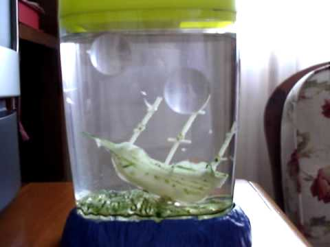 My Sea Monkeys are doing Great 2 years later  YouTube