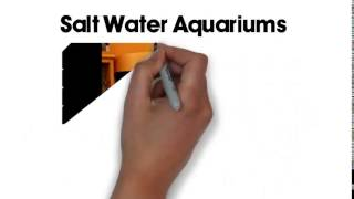 Aquatic Interiors - Custom Aquariums - Fresh Water & Saltware Aquariums Build - San Antonio,tx