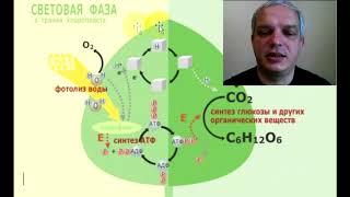 Сходство хемосинтеза и фотосинтеза состоит в том, что в обоих процессах