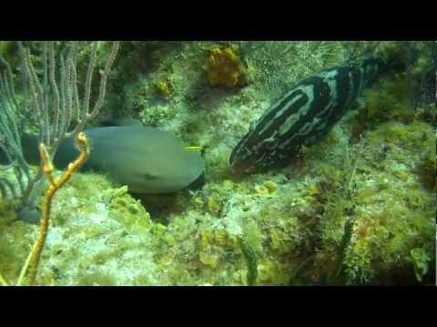 Cayman Islands - Little Cayman Beach Resort  | Scuba Diving, Little Cayman, Part 3