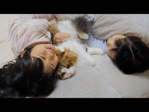娘達の1週間の疲れをぬいぐるみに徹して寝るまで癒す猫