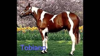 Common Horse Coat Colors