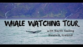 Video Whale Watching Tour in Husavik Iceland with North Sailing download MP3, 3GP, MP4, WEBM, AVI, FLV Desember 2017