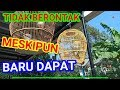Tips Menjinakkan Burung Liar Giras  Mp3 - Mp4 Download