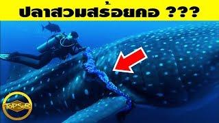 10 สิ่งสุดแปลกที่ค้นพบโดยนักประดาน้ำ (ไม่น่าเชื่อ)