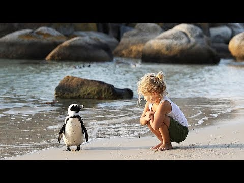Walk and Talk with Penguins in South Africa!