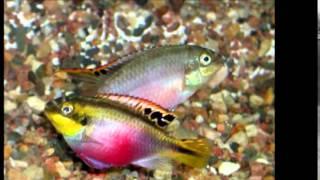 Музыка воды аквариумные рыбки