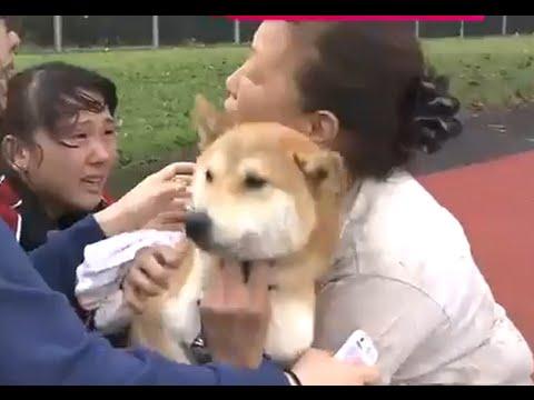 救助された犬 ボンドとリヤンリアン犬は置いてこられなかった 鬼怒川決壊