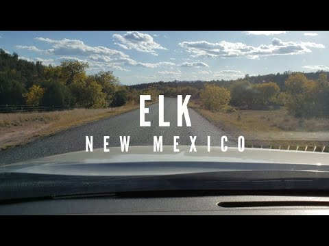 Elk Hunt - New Mexico