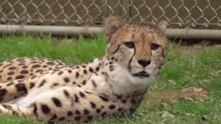 Popular Videos - Tama Zoological Park & Pets