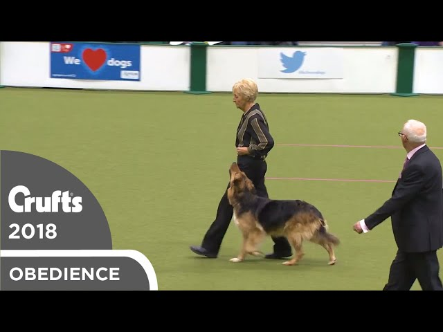 Obedience - Bitch Championship - Part 13 | Crufts 2018