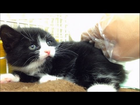 Adorable Kitten hissing - Part 2 Out of cage