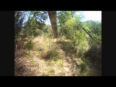 South Texas Rio Hunting With Dan Moody Hunting Services - Jeremy Judy and Dennis Judy