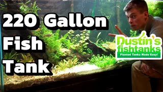 I waited 2 years for my 220 gallon Planted Aquarium. 220 Gallon Fish Tank