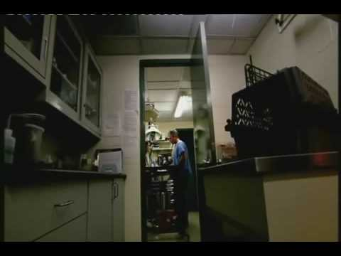 The Link - Darwinius Masillae - Ida Documentary - 4 of 6 BBC (22 of 30) ORKUT Community and Profile