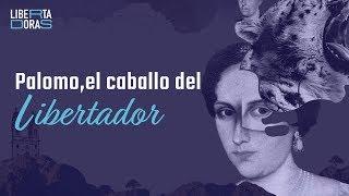 Palomo, el caballo de Simón Bolívar: esta es la historia - El Espectador