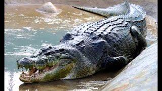 ظهور تمساح بأحد الشواطئ يرهب المصطافين