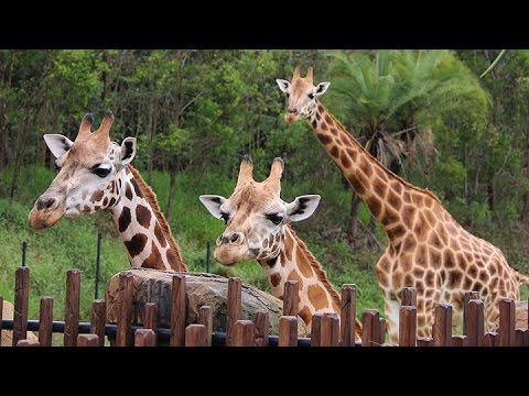 Australia Zoo Animals