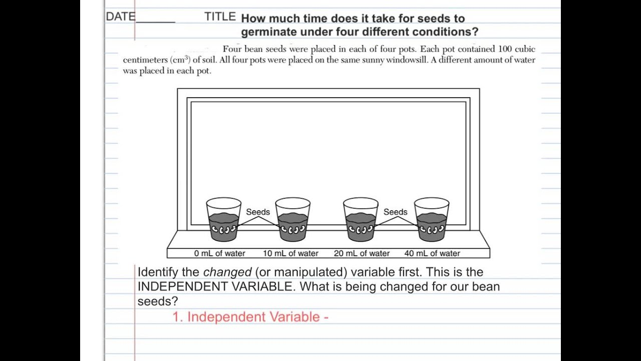 Worksheets  Scientific Method Vocabulary -