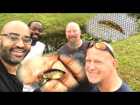 NEW FISH FOUND! Collecting Wild Killifish And Flagfish In Florida