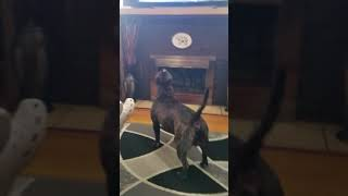 Live PD dog action