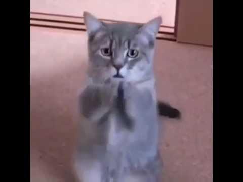 Unduh 101+ Gambar Kucing Minta Maaf Terbaru Gratis