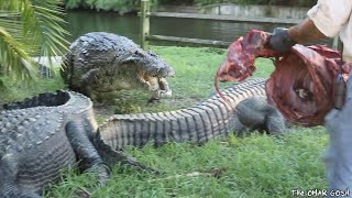 Dangerous Encounter With Man Eating Nile Crocodile