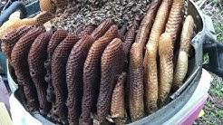 Bees In Da Trash