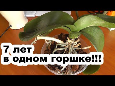 пересадка очень старой орхидеи