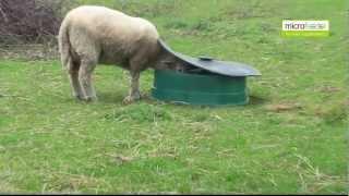 Basisfeeder [sheep | Schafe | Får]