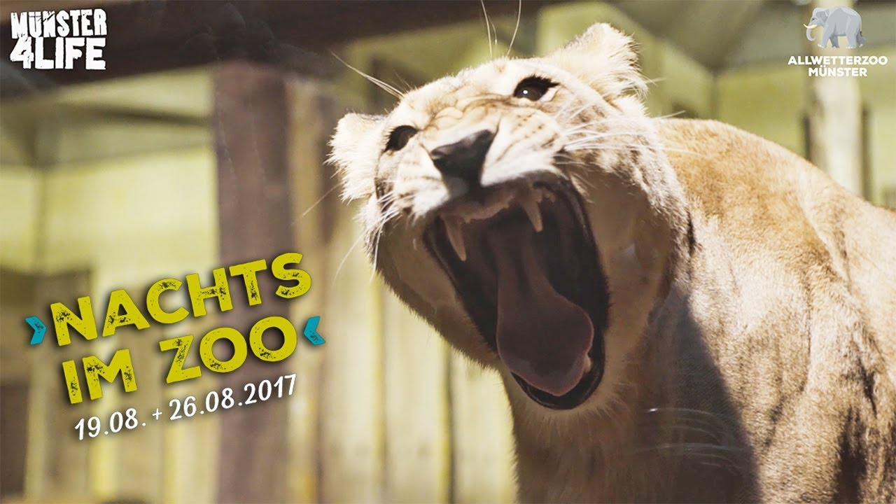 allwetterzoo mГјnster hunde