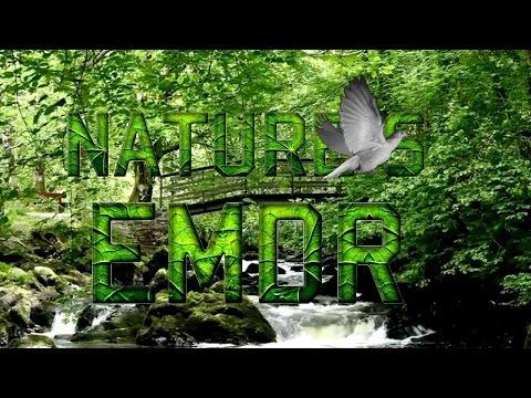 Nature's EMDR