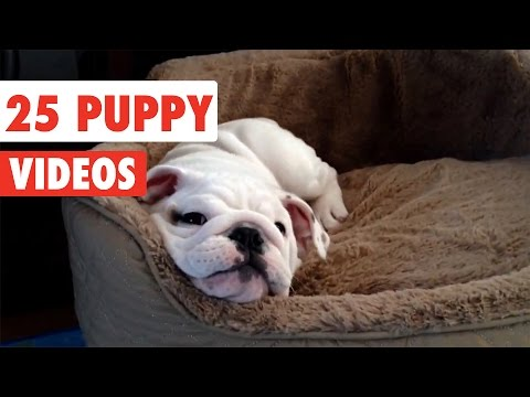 25 Puppy Videos Compilation 2017