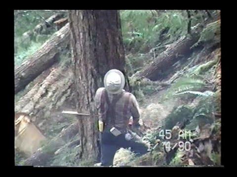 Logging Olympic Peninsula 1