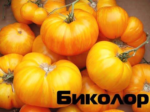 Томаты Биколор, полосатые (План 9, Мери Робинсон, Грейпфрут..)