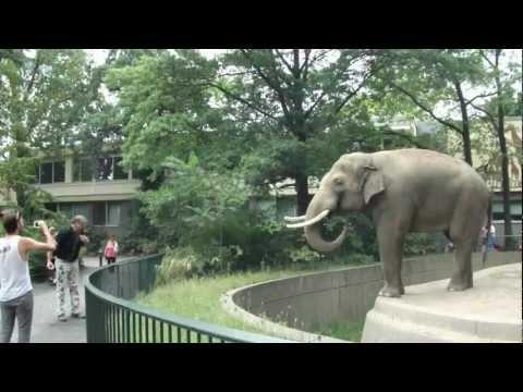 Elephant Spraying Poo on Man - ORIGINAL at Berlin Zoo
