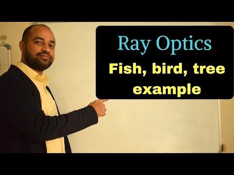 Ray Optics 18 - Fish, Bird, Mirror Example