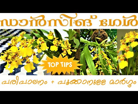 Orchid Care in
