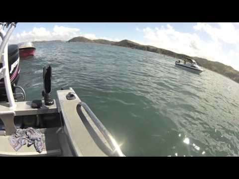 Shark Encounter, South Coast, Wellington, New Zealand