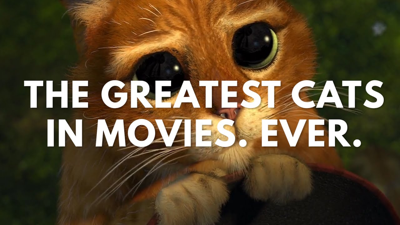 The Greatest Cats In Movies. Ever. (Best Cat Scenes Supercut)