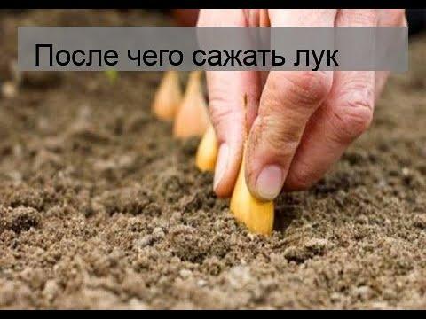 После чего сажать лук