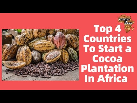 Top 4 Countries To Start a Cocoa Plantation In Africa |  Best Agri-Business Ideas in Africa