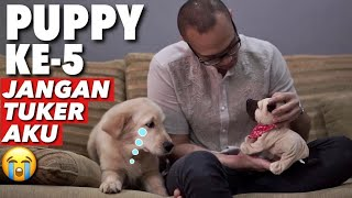 PUPPIES GAK RELA DIGANTIKAN ROBOT!  | THE GOLDEN FAMILY